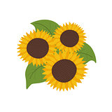 Sunflowers with green leaves vector illustration isolated on white background flat style