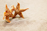 Meeting two starfish. The concept of a triotic trip for two or meeting two old friends