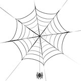 Polygonal Grey Spider and Her  Cobweb