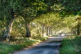 Tree covered rural lane at sunrise