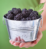 Blackberries in a small metallic bucket - in woman hand