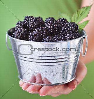 Blackberries in a small metallic bucket - in woman hand