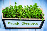Fresh Greens in Box