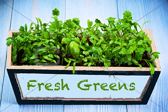 Fresh Greens in Box