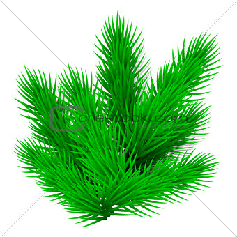 Green lush spruce branch. Isolated on white vector illustration