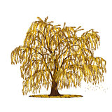 detached tree willow with yellow leaves