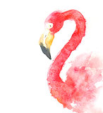 Illustration of a watercolor portrait of a red flamingo