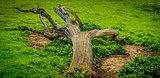 Fallen tree on the green grass field