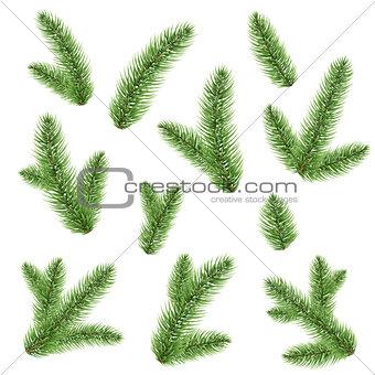 Green Fir-tree Branch