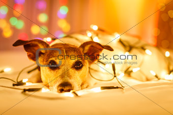 christmas dog with fairy lights