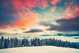 Winter sunset landscape with pine tree forest
