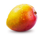 Ripe mango with water drops isolated