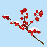 hoar frost covered hawthorn berry isolated on blue