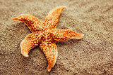 Beautiful starfish against a background of sand