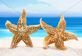 Two sea stars on the background of the sea shore. The concept of a romantic trip or marriage proposal