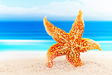 Dancing starfish against the background of the sea shore