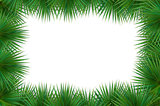 Colorful naturalistic frame from the leaf palm. Vector Illustrat