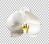 Flowers of the Orchid White Vector Illustration