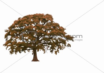Abstract Autumnal Oak Tree