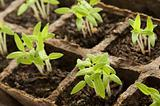 Sprouting Plants34