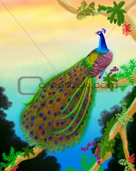 Green Peacock in the Jungle