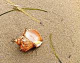 shell on coast sand