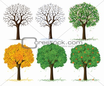 vector silhouette of seasonal tree