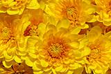 Close up of yellow fleur.