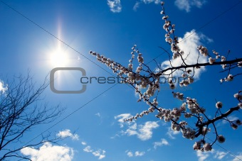 twigs and sun