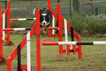 Agility competition