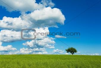 Tree, Sky & Field