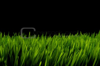 Green grass against black