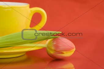 Yellow cap and tulip