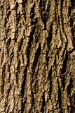 bark01