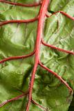swiss_chard-03