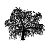 silhouette detached tree willow with leaves