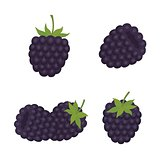 Blackberry. Sweet fruit. Forest berry. vector icons set.