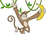 Funny monkey with banana.