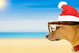 dog watching the beach on summer christmas holidays