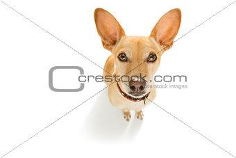 close up curious dog looks up