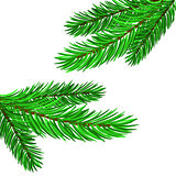 Fir Green Branches