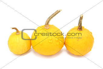 Three round orange ornamental gourds with warty lumps