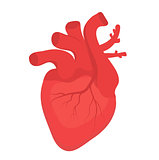 Human heart icon, flat style. Internal organs symbol. Anotomy, cardiology, concept. Isolated on white background. Vector illustration.