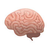 Human brain icon, flat style. Internal organs symbol the side view, isolated on white background. Vector illustration.