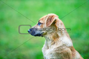 A homeless dog with a piebald color on a green background