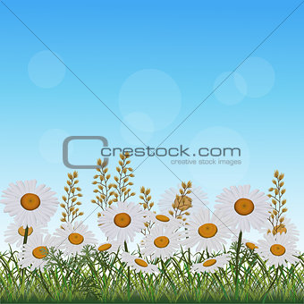 lawn with flowers chamomile and herbs