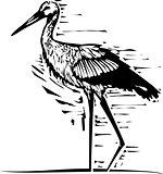 Woodcut wading Stork