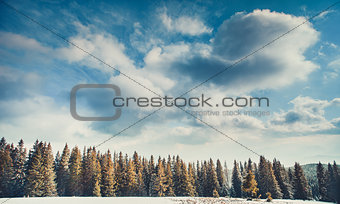 The cloudy blue sky above the woods. Carpathians.