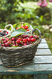 Fresh forest fruit on wood