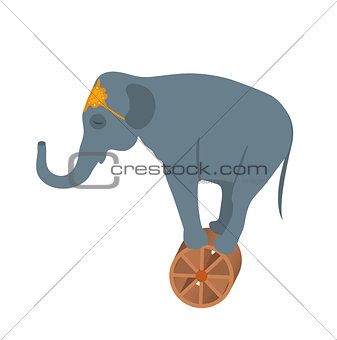 Circus elephant on the wheel icon style flat, isolated on white background. Vector illustration.